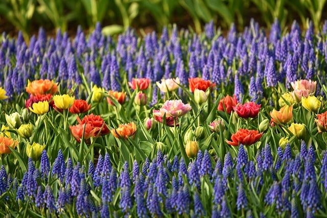 multiple flowers in a flower bed